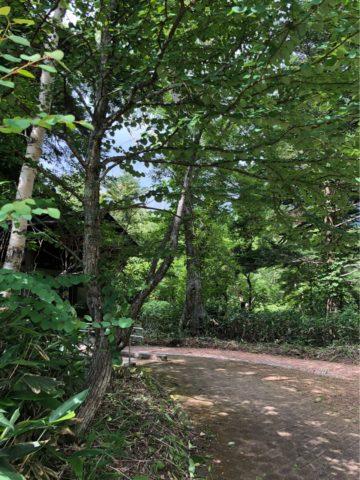 日光湯元キャンプ場,ファミリーキャンプ,子連れキャンプ