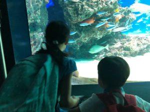 サンシャインシティ,スカイサーカス,こどもとおでかけ,東京おでかけ,水族館,夏休み